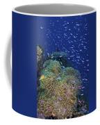 Swarms Of Small Baitfish Swim Coffee Mug