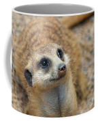 Sweet Meerkat Face Coffee Mug