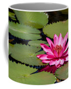 Sweet Pink Water Lily In The River Coffee Mug