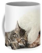 Tabby Kitten And Bichon Fris� Coffee Mug