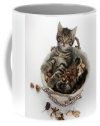 Tabby Kitten In Potpourri Basket Coffee Mug
