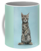 Tabby Kitten Sitting Up Coffee Mug