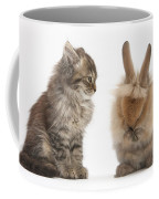 Tabby Kitten With Young Rabbit, Grooming Coffee Mug