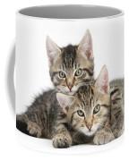 Tabby Kittens Cuddling Coffee Mug