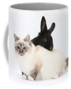 Tabby-point Birman Cat And Black Rabbit Coffee Mug