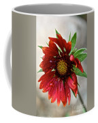 Teary Gaillardia Coffee Mug