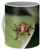 Terrestrial Turtle Bug Coffee Mug by Ted Kinsman