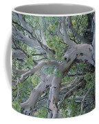 Texas Madrone Tree Limbs Coffee Mug
