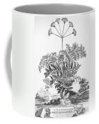 Thapsia Major Latifolia Coffee Mug