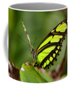 The Beautiful Color Of A Malachi Butterfly Coffee Mug