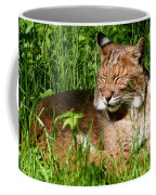 The Bobcat's Afternoon Nap Coffee Mug