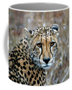 The Cheetah Stare Coffee Mug