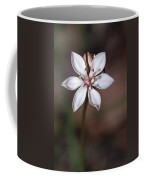 The Delicate Pastel Pink Flower Coffee Mug by Jason Edwards