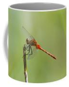 The Dragonfly Hangs On Coffee Mug