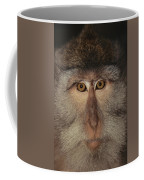 The Face Of A Long-tailed Macaque Coffee Mug
