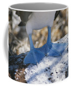The Feet Of A Blue Footed Booby Bird Coffee Mug by Gina Martin