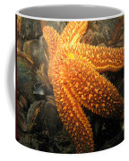 The Great Starfish Coffee Mug by Paul Ward