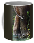 The Hindquarters Of A Malaysian Coffee Mug