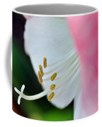 The Naked Lady - Hippeastrum Coffee Mug