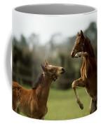Thoroughbred Foals Playing Coffee Mug