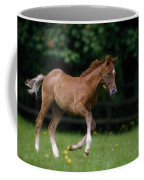 Thoroughbred Horse, National Stud Coffee Mug