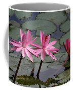 Three Sweet Pink Water Lilies Coffee Mug