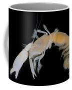 Tidepool Ghost Shrimp Coffee Mug