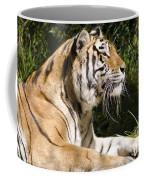 Tiger Observations Coffee Mug