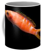 Tiger Queen Anthias Coffee Mug