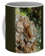 Tiny Cryptic Brown And Grey Shrimp Coffee Mug