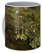 Tiny Flowering Plant Grows In Moss Coffee Mug