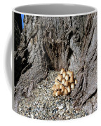 Toadstools In The Gravel Coffee Mug by Will Borden