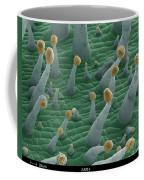 Tobacco, Sem Coffee Mug
