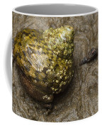 Top Shell Clanculus Sp Coffee Mug