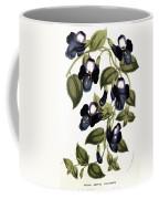 Torenia Asiatica Pulcherrima Coffee Mug