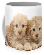 Toy Labradoodle Puppies Coffee Mug