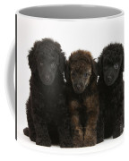 Toy Poodle Pups Coffee Mug