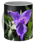 Tradescantia Named Andersonia Mauve Coffee Mug