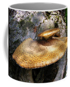 Tree Fungus 1 Coffee Mug