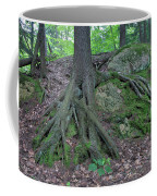 Tree Growing Over A Rock Coffee Mug by Ted Kinsman