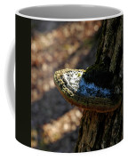 Tree Shelf Snow Sprinkled Fungus Coffee Mug