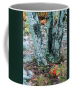 Tree Trio In Lichen At Hawn State Park Coffee Mug