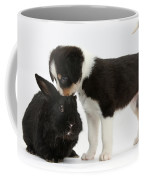 Tricolor Border Collie Pup With Black Coffee Mug