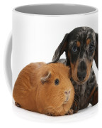 Tricolor Merle Dachshund Pup And Red Coffee Mug