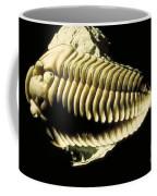 Trilobite Fossil Coffee Mug