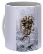 Trilobite Coffee Mug