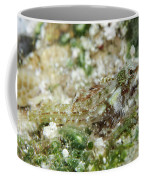 Triplefin, Indonesia Coffee Mug