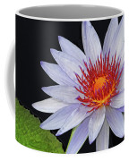 Tropical Waterlily Coffee Mug