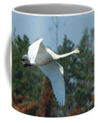 Trumpeter Swan In Flight Coffee Mug