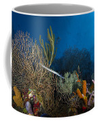 Trumpetfish, Belize Coffee Mug